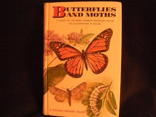 9780307640529: Butterflies and Moths (Golden Guides)