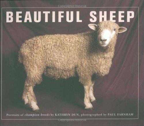 9780312385125: Beautiful Sheep: Portraits of Champion Breeds