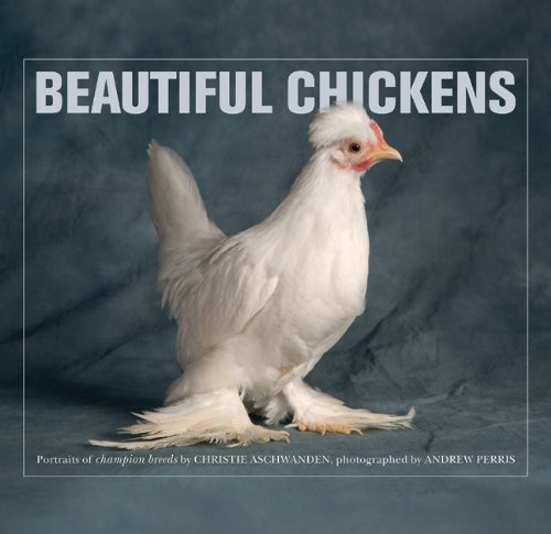 9780312613778: Beautiful Chickens