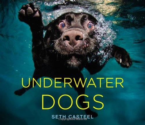 9780316227704: Underwater Dogs