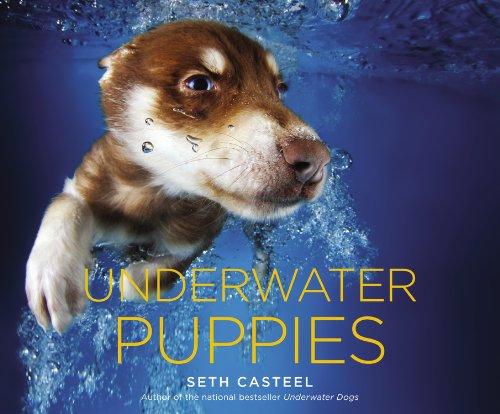 9780316254892: Underwater Puppies
