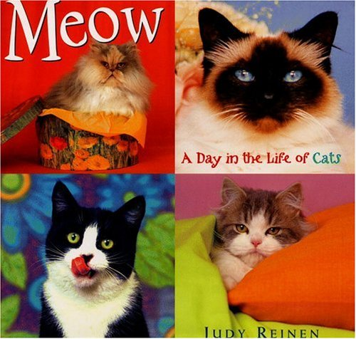 9780316833424: Meow: A Day in the Life of Cats