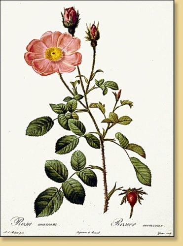 9780320059049: Roses