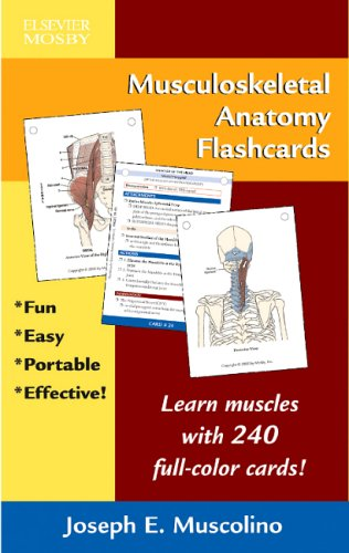 9780323034524: Musculoskeletal Anatomy Flashcards