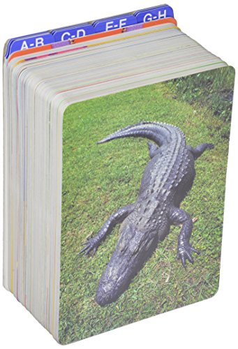 9780328050499: EARLY READING INTERVENTION PICTURE CARDS
