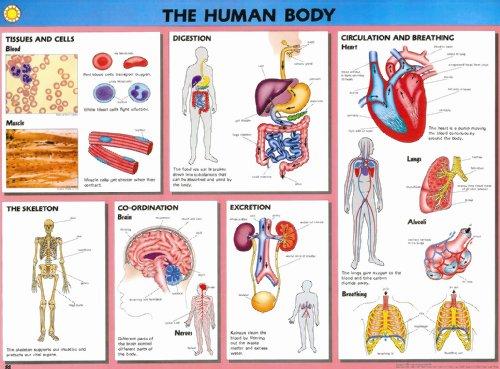 9780333456224: Human Biology Wallcharts (Human biology w/charts)