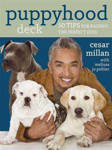 9780340993088: Puppyhood Deck: 50 tips for raising the perfect dog