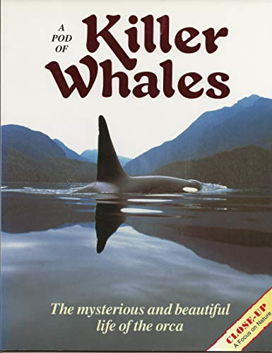 9780382249013: A Pod of Killer Whales: The Mysterious and Beautiful Life of the Orca (Close Up)