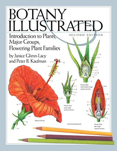 9780387288703: Botany Illustrated: Introduction to Plants, Major Groups, Flowering Plant Families