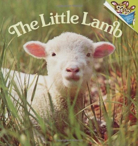 The Little Lamb (Pictureback(R)): Judy Dunn; Phoebe