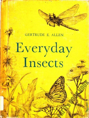 Everyday Insects: Gertrude E. Allen