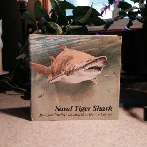 9780395287798: Sand Tiger Shark