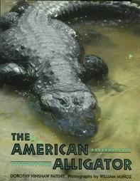9780395633922: The American Alligator