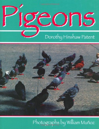 9780395698488: Pigeons