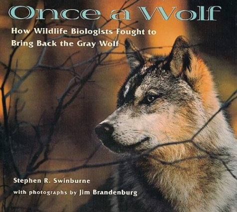 9780395898277: Once A Wolf: How Wildlife Biologists Fought to Bring Back the Gray Wolf (Scientists in the Field Series)