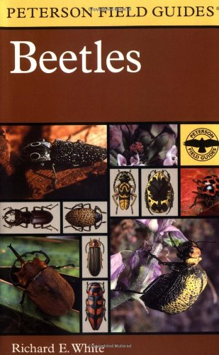 9780395910894: A Field Guide to the Beetles of North America