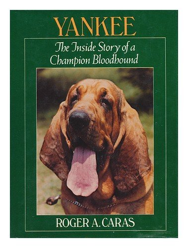 9780399206887: Yankee : the Inside Story of a Champion Bloodhound / Roger A. Caras