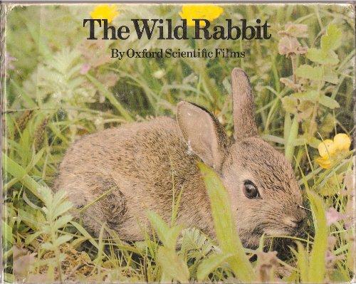 9780399207303: The Wild Rabbit