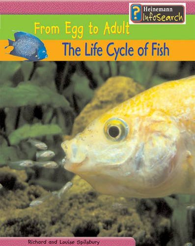 9780431168692: The Life Cycle of Fish: From Egg to Adult : From Egg to Adult (Heinemann Infosearch): From Egg to Adult (Heinemann Infosearch)
