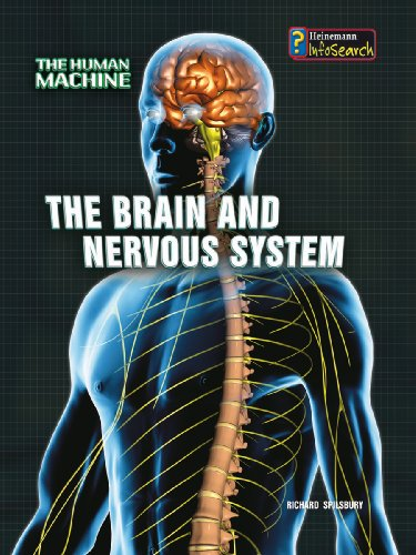9780431192093: The Brain and Nervous System (InfoSearch: The Human Machine)