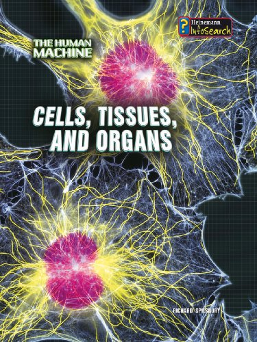 9780431192109: Cells, Tissues, and Organs (InfoSearch: The Human Machine)