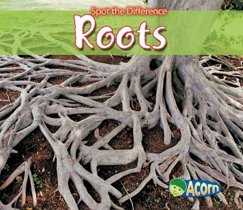 9780431192284: Roots (Acorn: Spot the Difference)