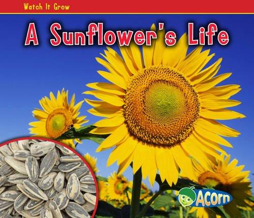 9780431195414: A Sunflower's Life (Acorn: Watch It Grow)