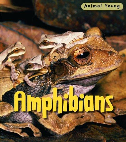9780431932323: Amphibians (Animal Young)