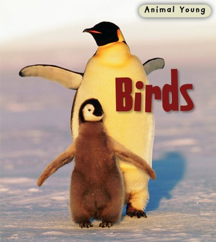 9780431932330: Birds (Animal Young)