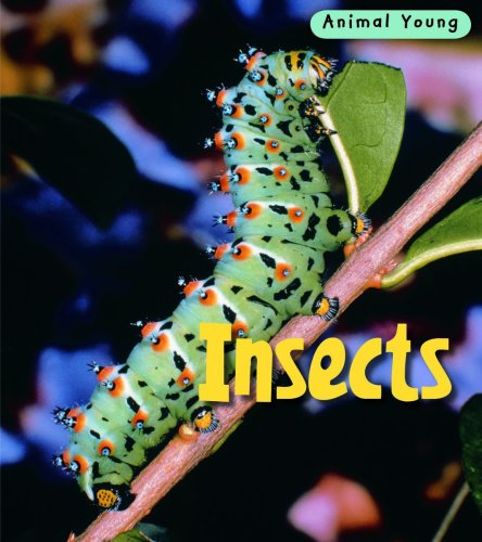 9780431932354: Insects (Animal Young)