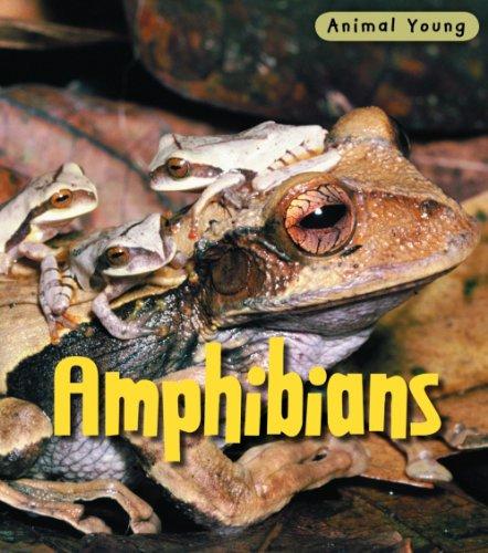 9780431932392: Amphibians (Animal Young)