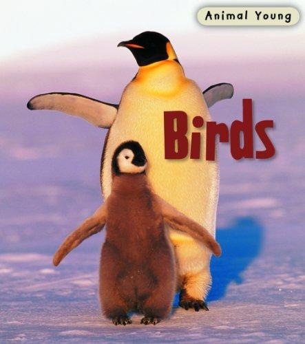 9780431932408: Birds (Animal Young)