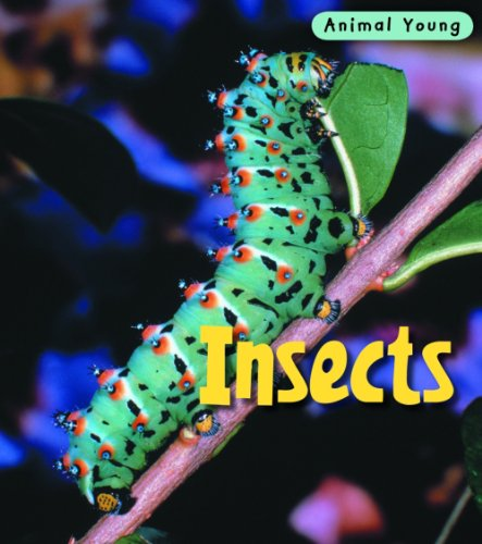 9780431932422: Insects (Animal Young)
