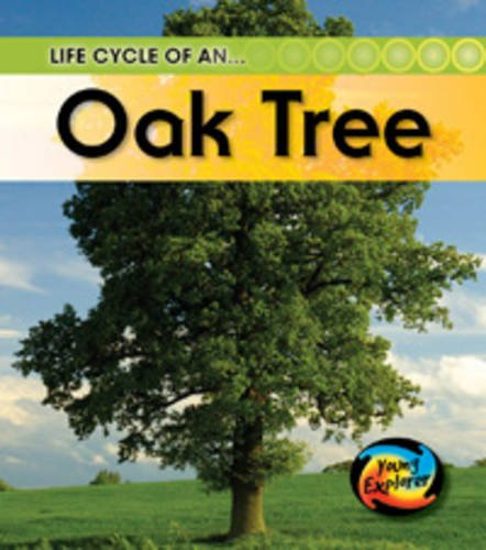 9780431999418: Life Cycle of an Oak tree (Young Explorer: Life Cycles)