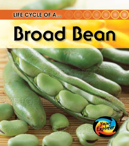 9780431999432: Life Cycle of a Broad Bean (Young Explorer: Life Cycles)