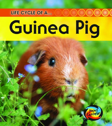 9780431999456: Life Cycle of a Guinea Pig (Young Explorer: Life Cycles)