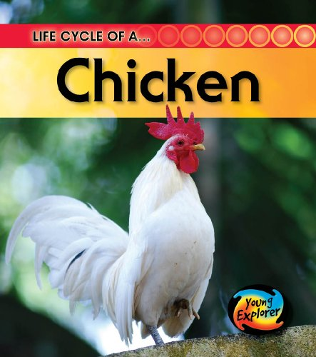 9780431999494: Life Cycle of a Chicken (Young Explorer: Life Cycles)
