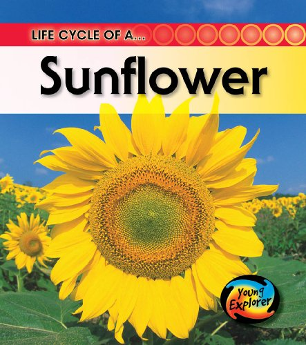 9780431999500: Life Cycle of a Sunflower (Young Explorer: Life Cycles)