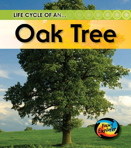 9780431999593: Life Cycle of an Oak tree (Young Explorer: Life Cycles)