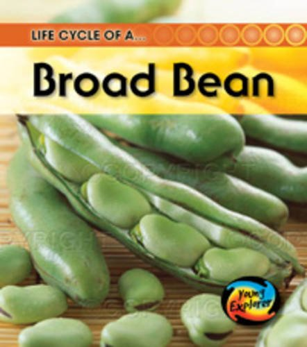 9780431999616: Life Cycle of a Broad Bean (Young Explorer: Life Cycles)