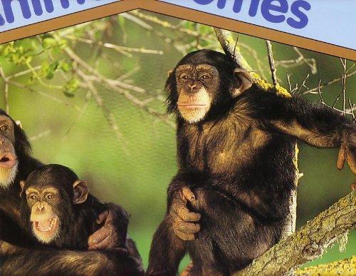 9780439408905: Animal Homes; Science Scholastic Big Book