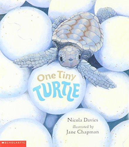 9780439429832: One Tiny Turtle