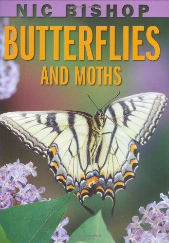 9780439877572: Nic Bishop: Butterflies and Moths