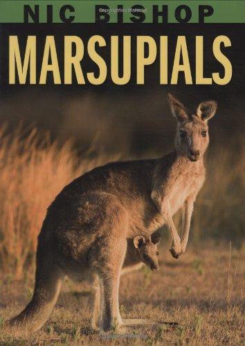 9780439877589: Nic Bishop: Marsupials