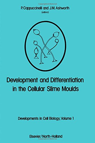 Development and differentiation in the cellular slime moulds: Proceedings of the international ...