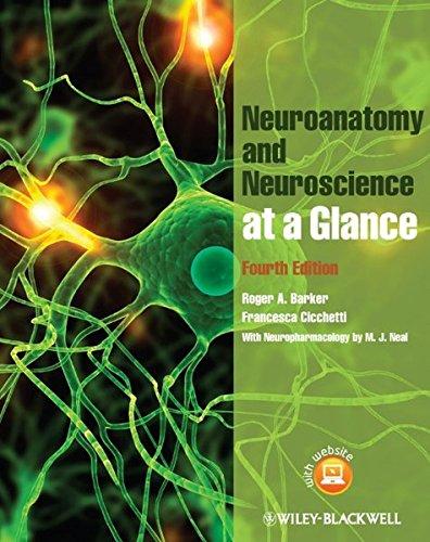 9780470657683: Neuroanatomy and Neuroscience at a Glance
