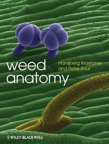 WEED ANATOMY: KRAEHMER