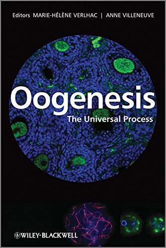 9780470696828: Oogenesis: The Universal Process
