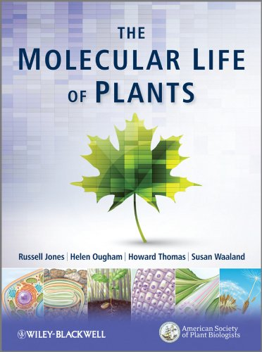 9780470870129: The Molecular Life of Plants