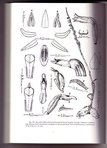 9780472048168: Flora Novo-Galiciana: A Descriptive Account of the Vascular Plants of Western Mexico, Orchidaceae, Vol. 16